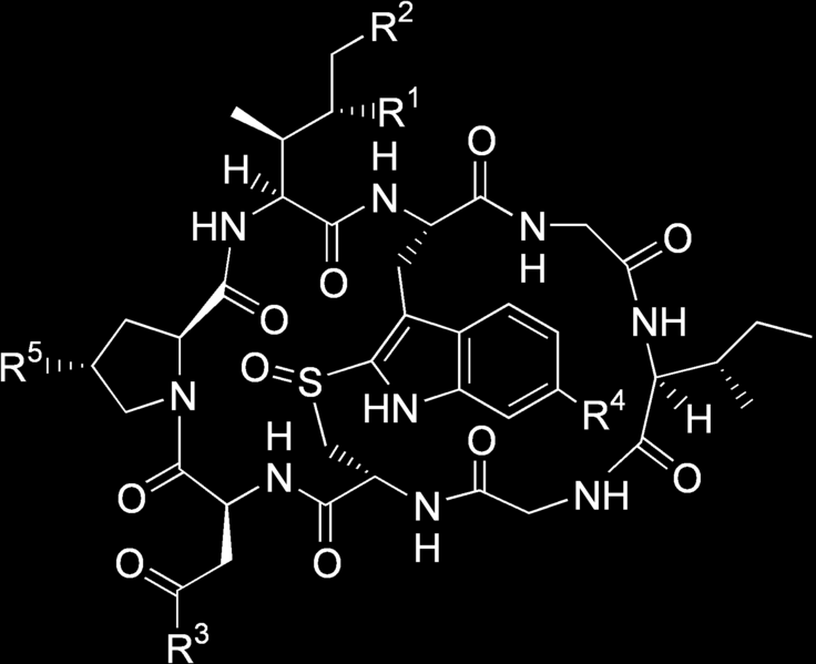 Chemical structure of amatoxins Name R 1 R 2 R 3 R 4 R 5 α-amanitin NH2 OH OH OH OH β-amanitin OH OH OH OH OH γ-amanitin NH2 OH H OH OH