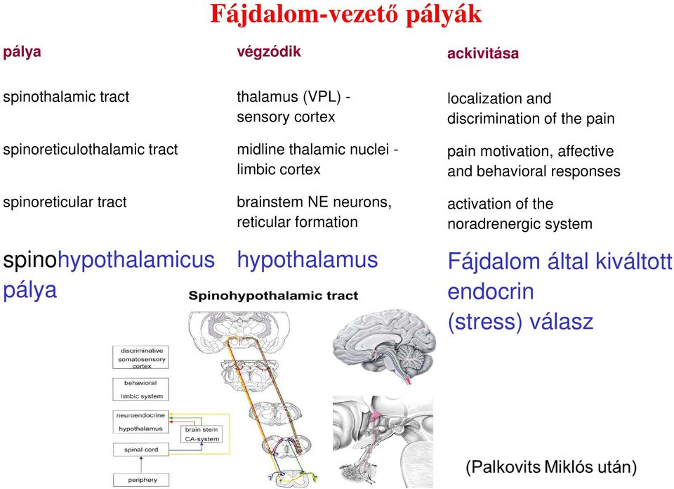 NE neurons, reticular formation hypothalamus localization and discrimination of the pain pain motivation,