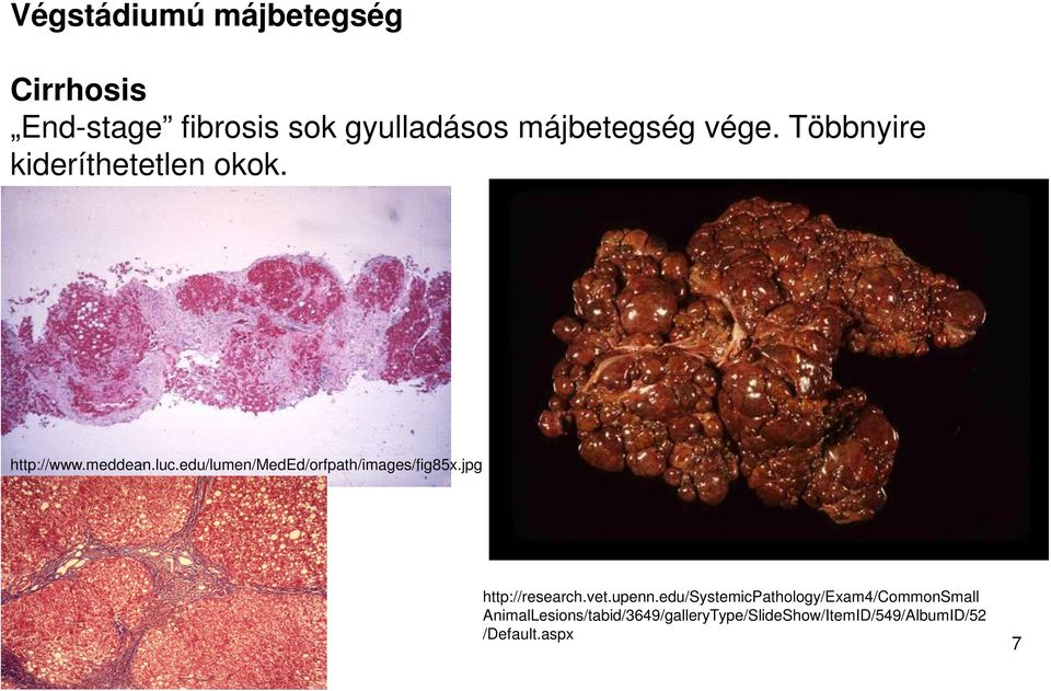 edu/lumen/meded/orfpath/images/fig85x.jpg http://research.vet.upenn.