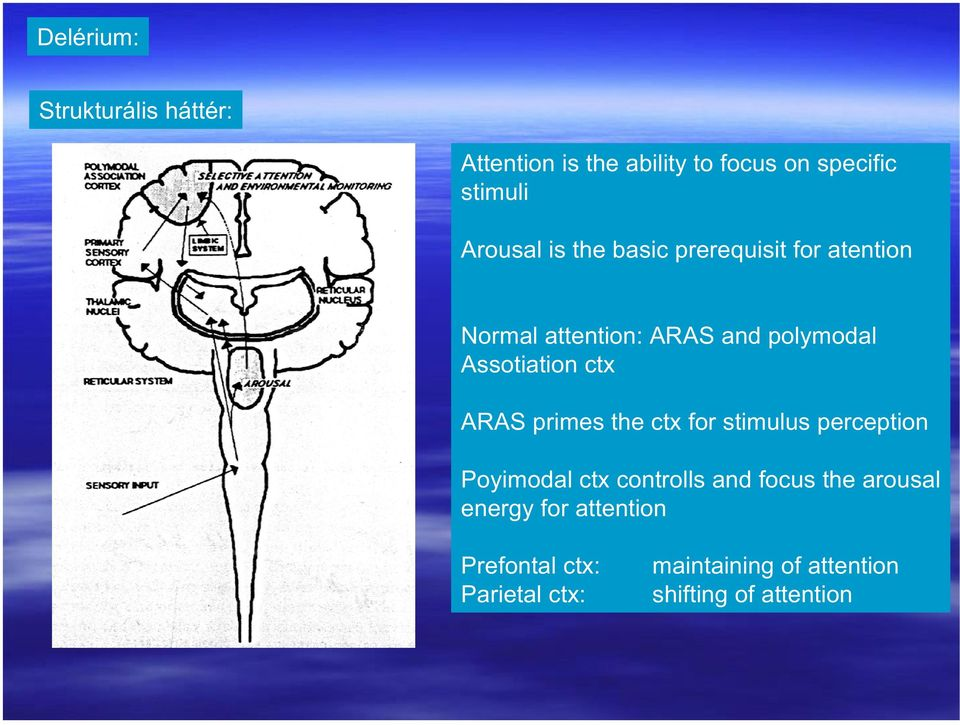 ARAS primes the ctx for stimulus perception Poyimodal ctx controlls and focus the arousal