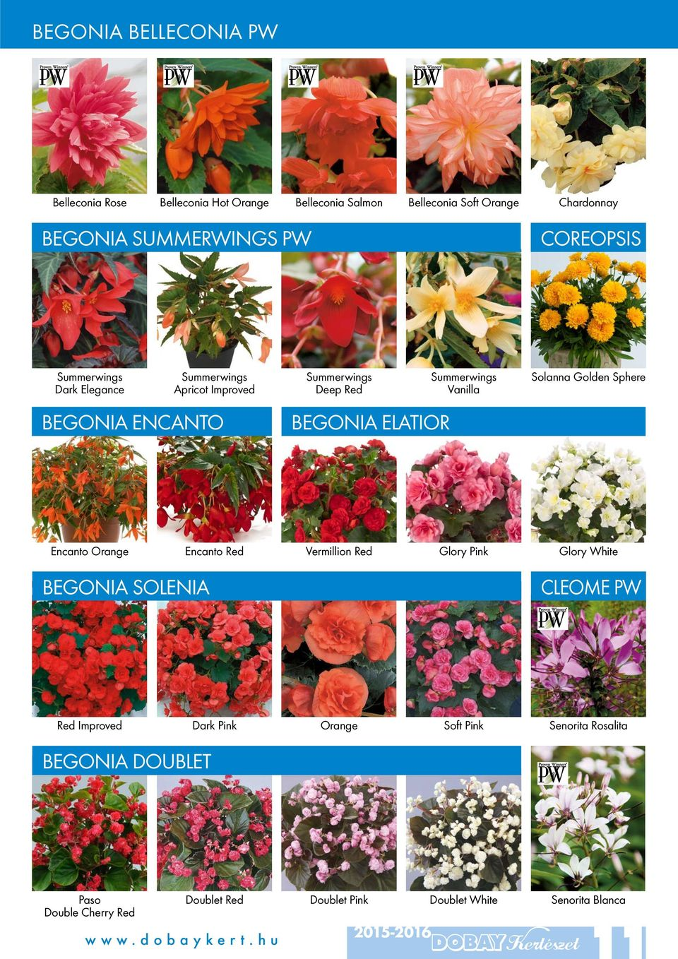 Vanilla Solanna Golden Sphere Encanto Orange Encanto Red Vermillion Red Glory Pink Glory White BEGONIA SOLENIA CLEOME PW Red Improved