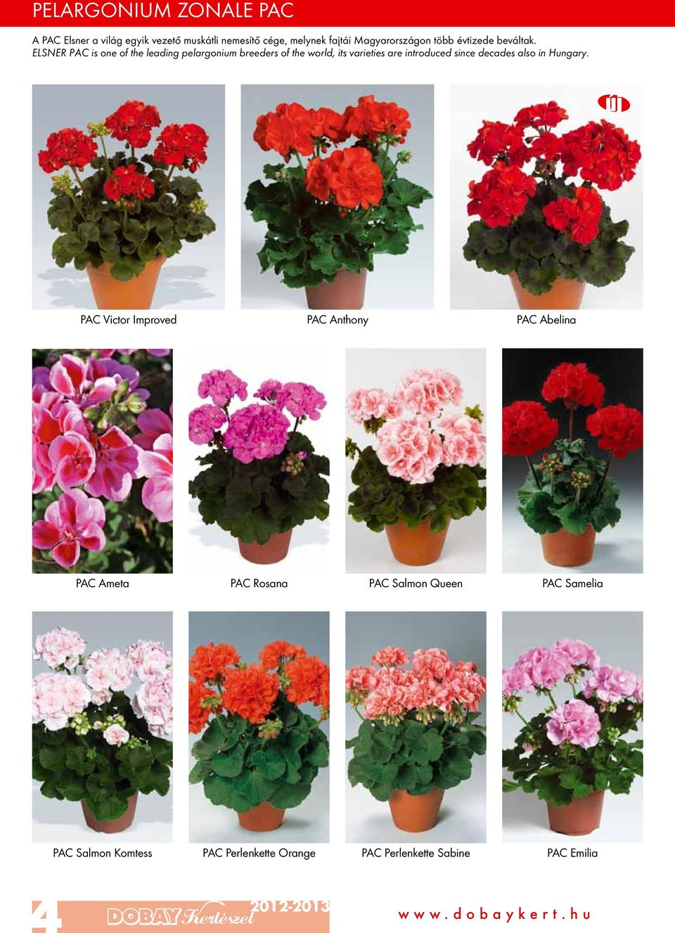 ELSNER PAC is one of the leading pelargonium breeders of the world, its varieties are introduced since