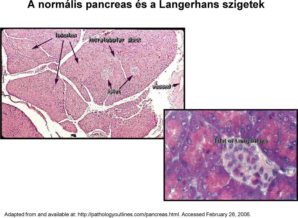 Langerhans Adapted from and available at: