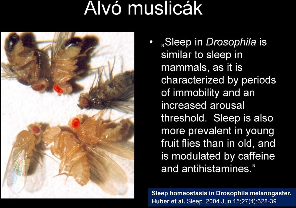 Sleep is also more prevalent in young fruit flies than in old, and is modulated by