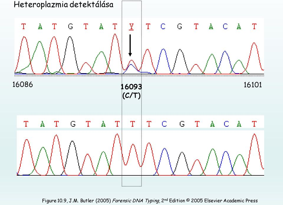 Butler (2005) Forensic DNA Typing,