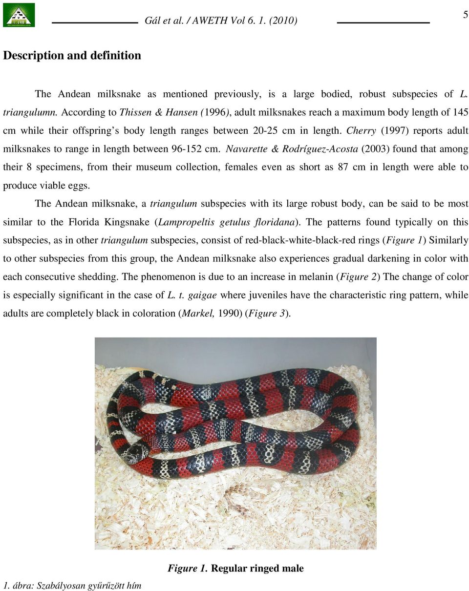 Cherry (1997) reports adult milksnakes to range in length between 96-152 cm.
