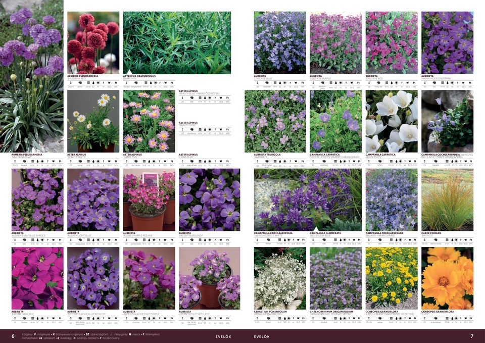 bordó SZ AUDREY LIGHT BLUE AXCET DAR RED ASTER ALPIUS HAPPY ED világoskk SZ kk, SZ emmel rózsaín ínkeverk III-V SZ söttlila SZ világos kk AXCET BURGUDY AXCET GLACIER DEEP PURPLE TAURICOLA VARIEGATA