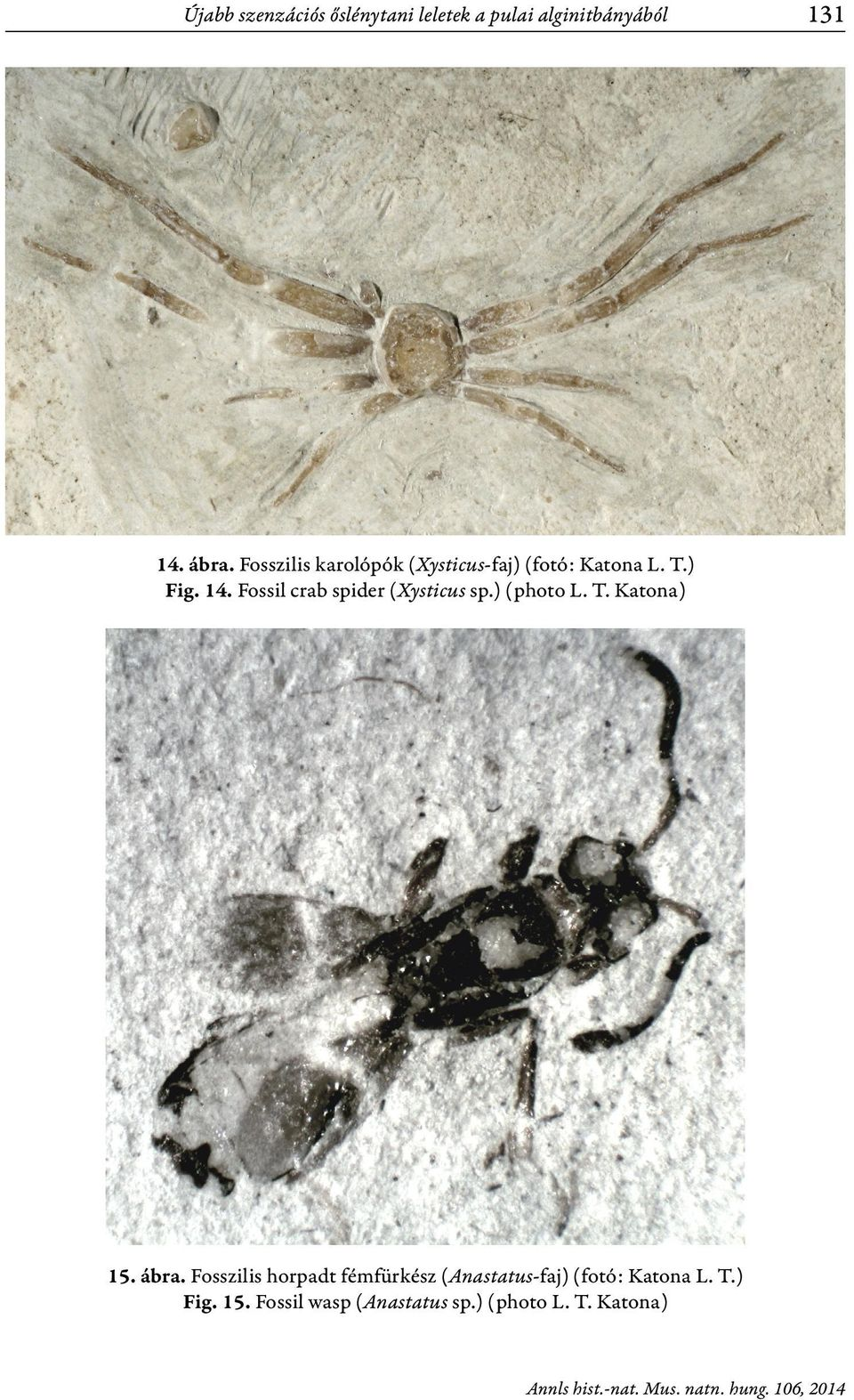 Fossil crab spider (Xysticus sp.) (photo L. T. Katona) 15. ábra.