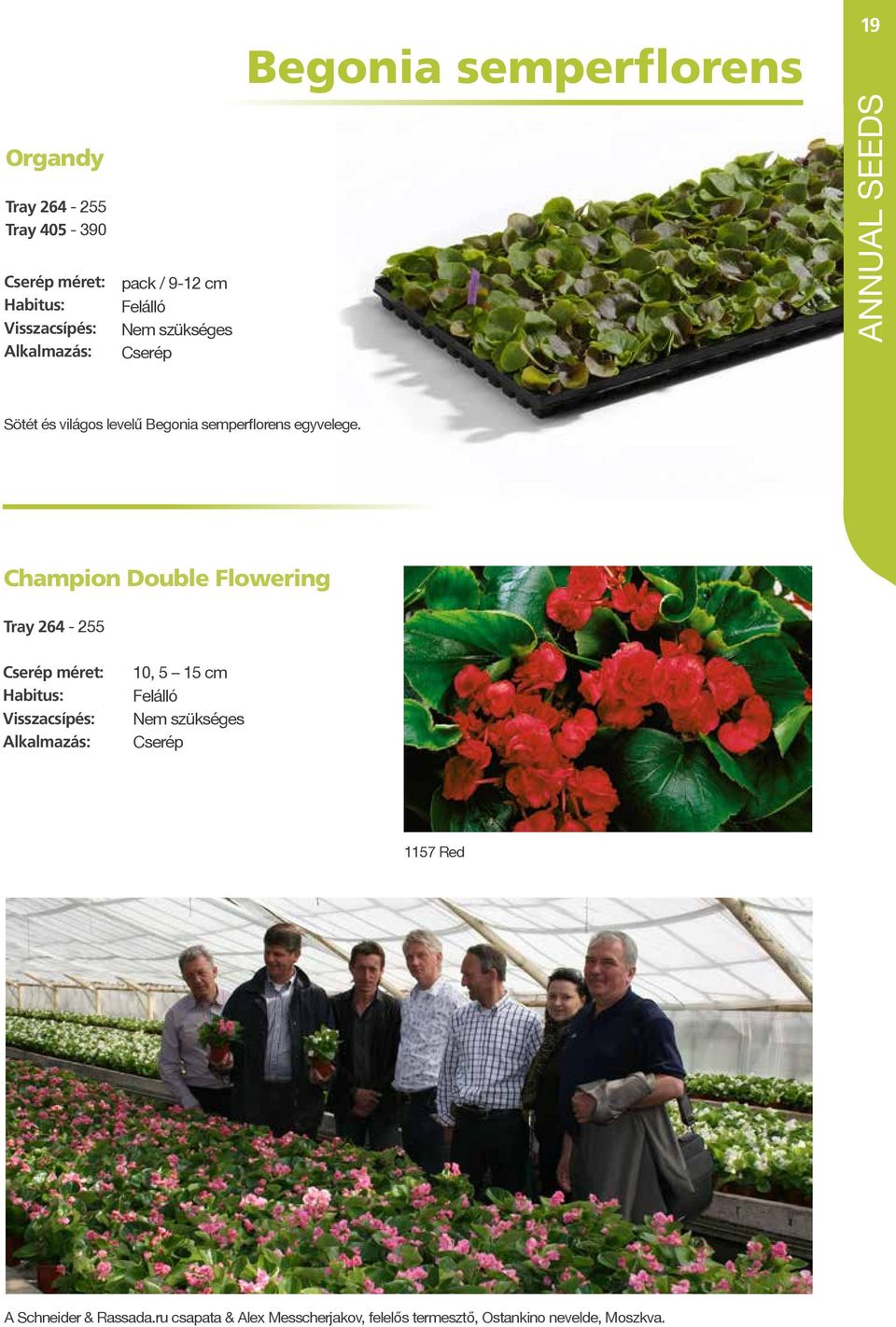 Champion Double Flowering Tray 264-255 10, 5 15 cm Cserép 1157 Red A Schneider