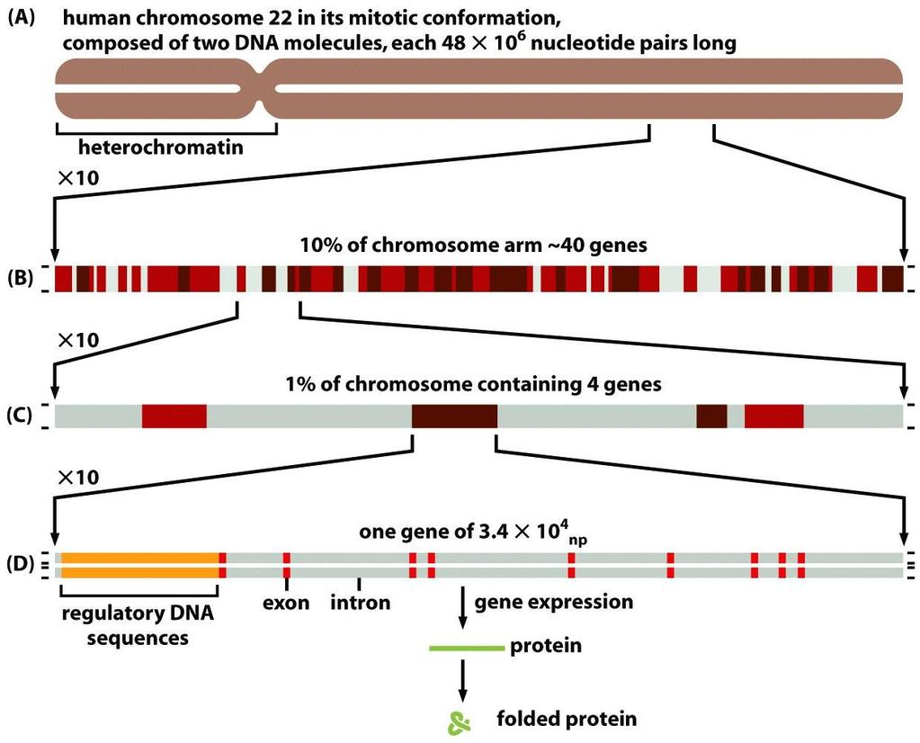 Figure 4-15 Molecular Biology of