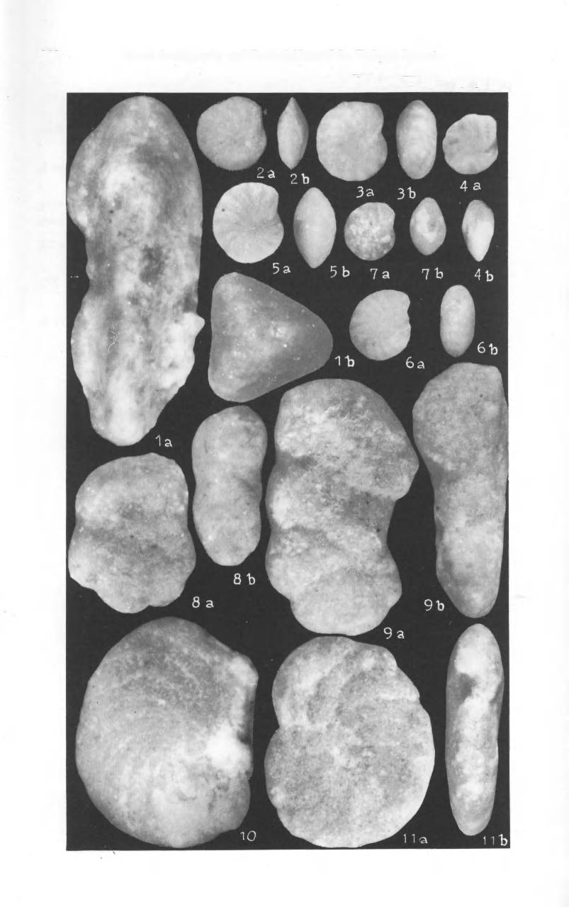 222 Zonal Stratigraphy and Foraminifera