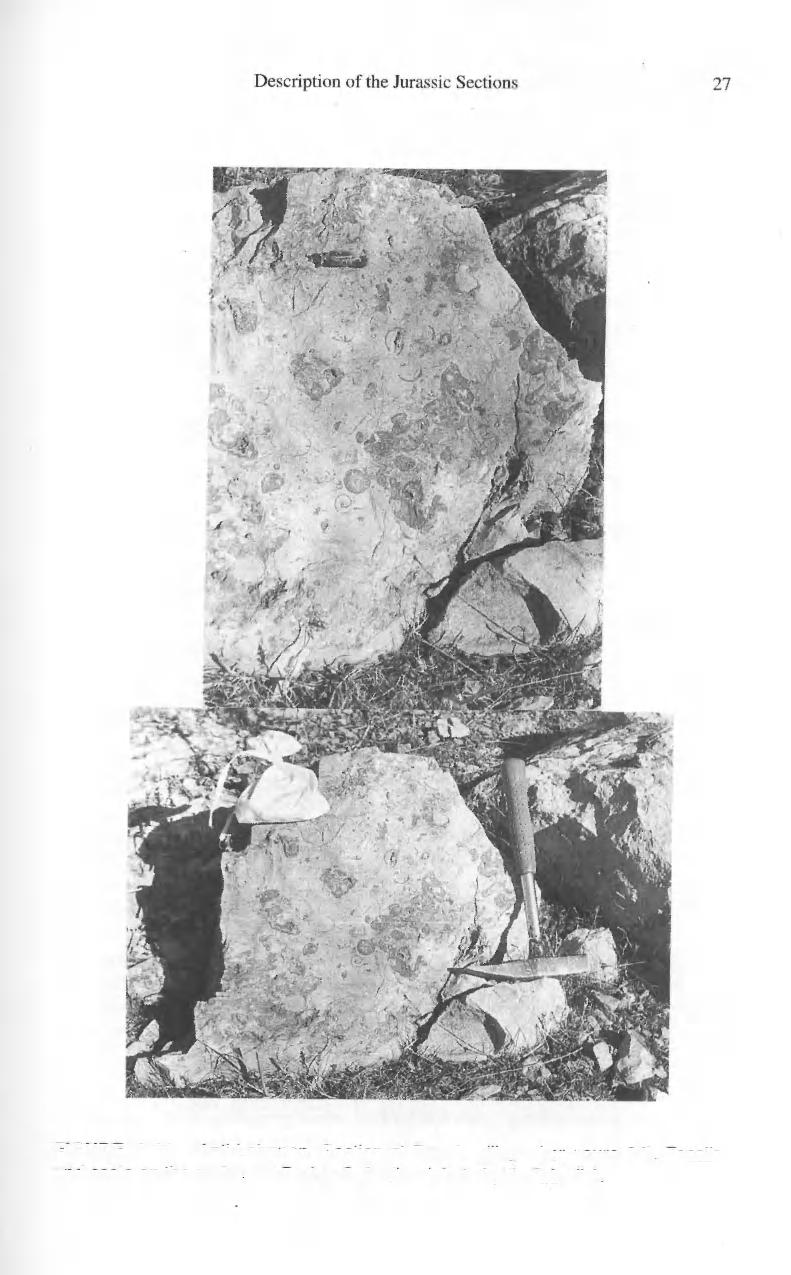 FIGURE 2.11 Anti-Lebanon. Section at Rowda village (exposure 34).
